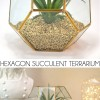 Hexagon Succulent Terrarium
