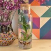 Easy Water Terrariums - Bottled Water Plants
