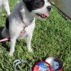 Flea, Tick & Mosquito Protection for Pets