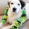 How To Patch Up Old Dog Toys - Waste Less with Tom's of Maine