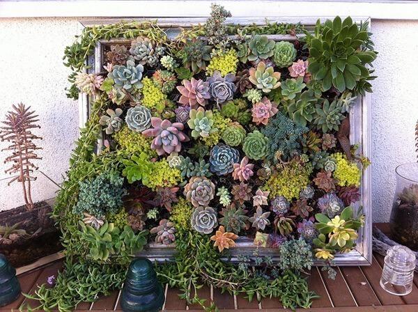 Succulent Love – Amazing Living Art