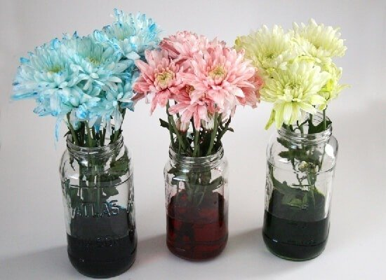 Learn how to dye white flowers with Dream a Little Bigger.