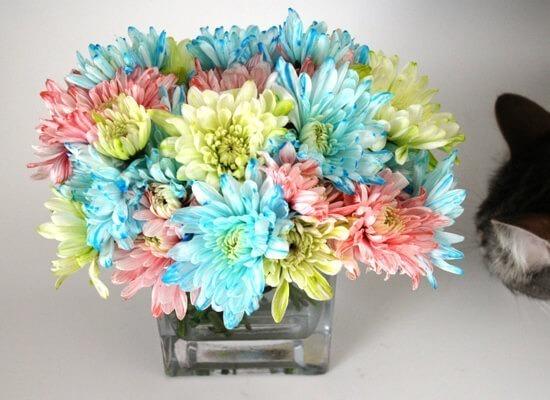 d006-dyeing-flowers-dream-a-little-bigger2