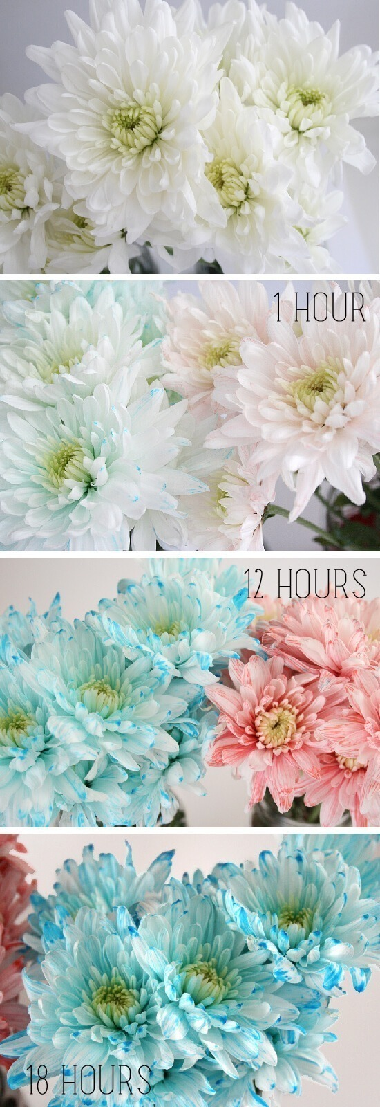 Learn How To Dye White Flowers With Dream A Little Ger