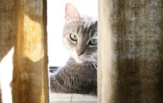 What You Need to Know about Owning Cats BEFORE You Bring One Home