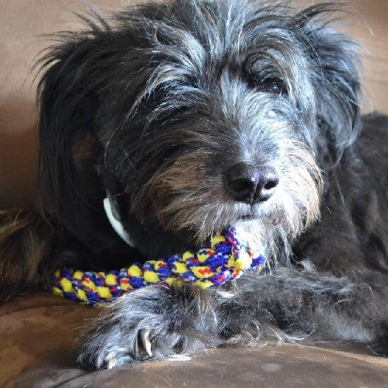Spiral/Round Lanyard Stitch Rope Dog Toy Tutorial -- www.dreamalittlebigger.com