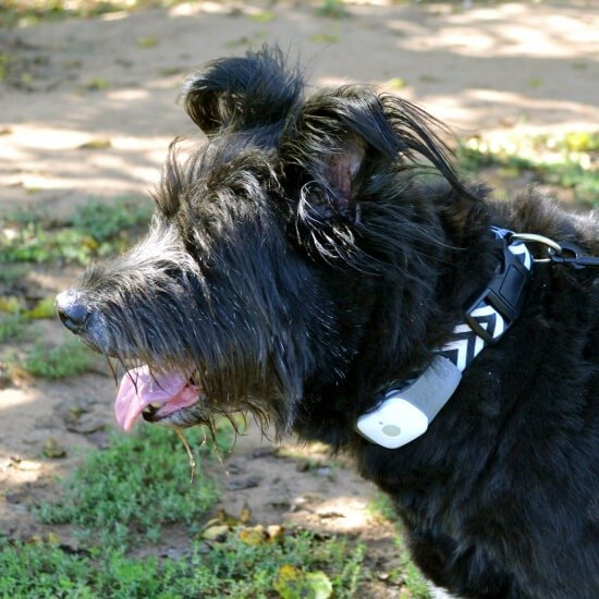 Tagg Pet Tracker Review - keep tags on your pet's activity levels and track them if they wander. Like a microchip that attaches to any collar.