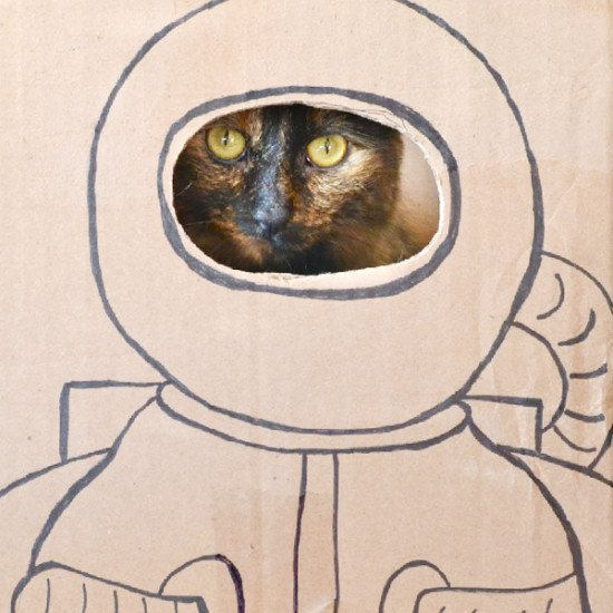 Cat Dressed as Astronaut - Pics about space