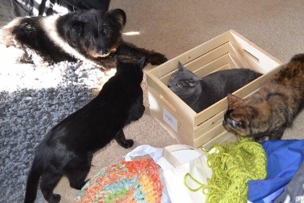 cats-being-helpful-dreamalittlebigger
