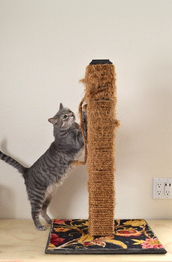 Interested in making a cat scratching post that will last? See how this $40 handmade version fared in 18 months with 4 cats!