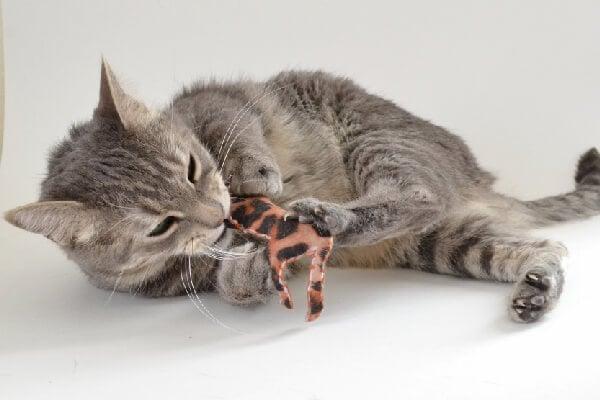 010-safari-catnip-toys-dreamalittlebigger