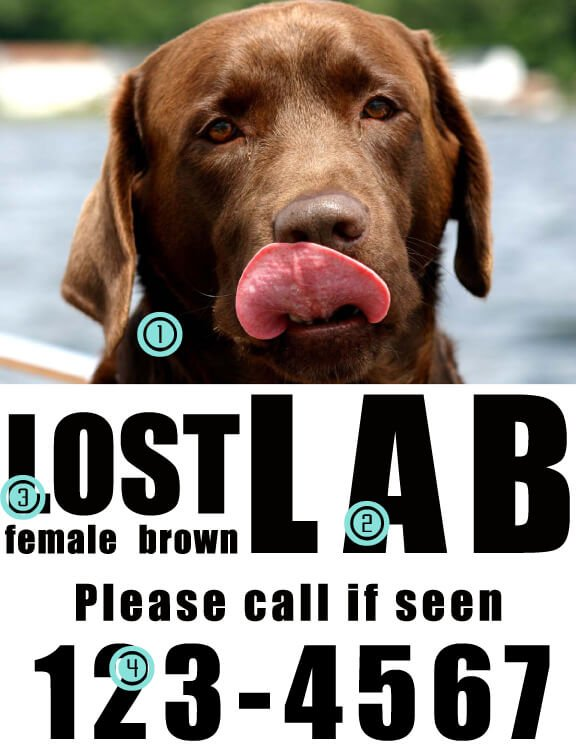 8 Tips to Make a Great Missing Pet Poster