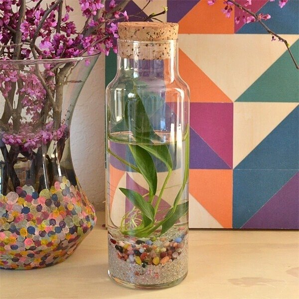 easy water terrariums bottled water plants dream a little bigger. Black Bedroom Furniture Sets. Home Design Ideas