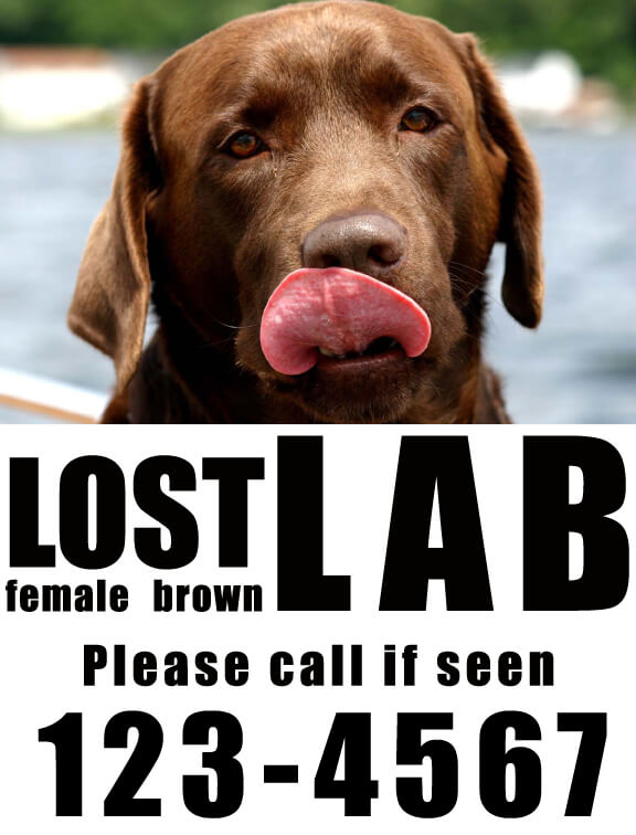 Example of how a good missing pet poster should look.