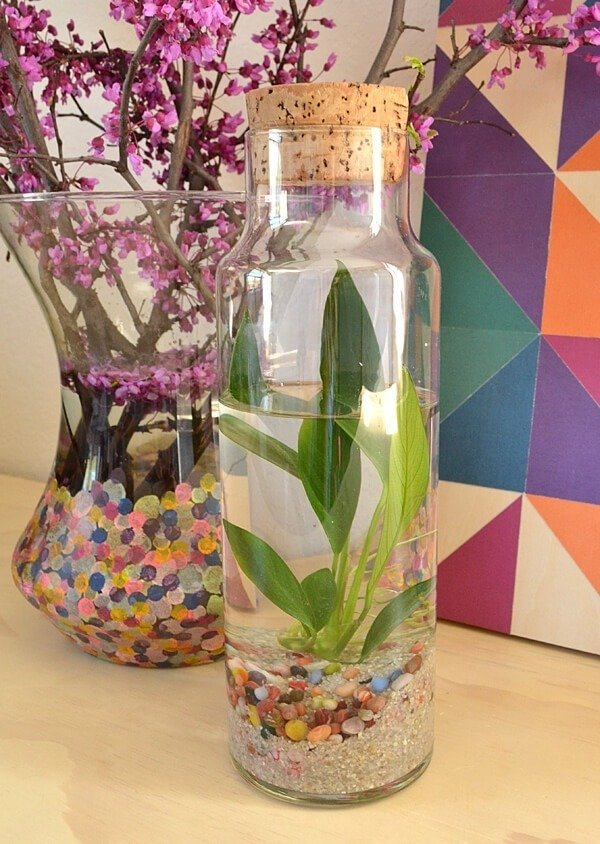 A water terrarium is a simple and confined little ecosystem that is very pretty to look at and brings some natural grace to your home decor!