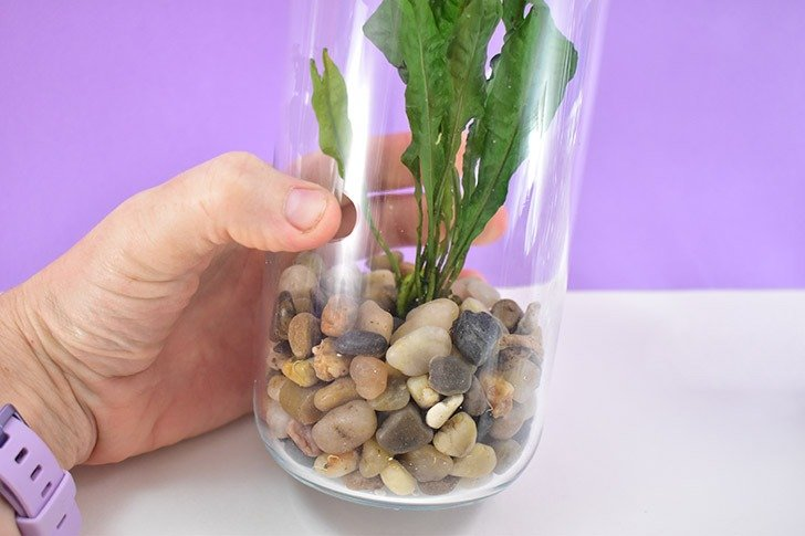 Continue sliding rocks into the jar over and around the plants roots to set it in place.