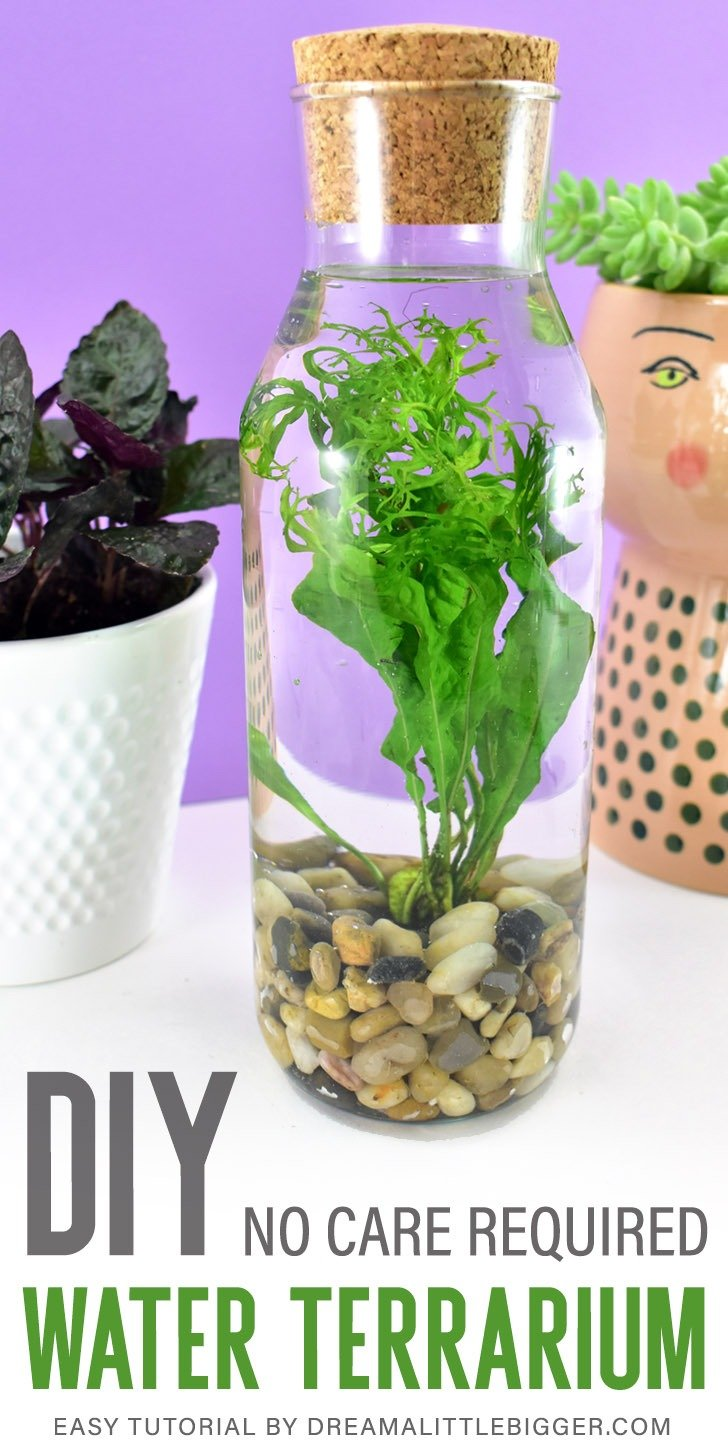 Even if you have a black thumb water terrarium in a glass bottle will thrive with absolutely no effort. See how to add this simple houseplant to your home!