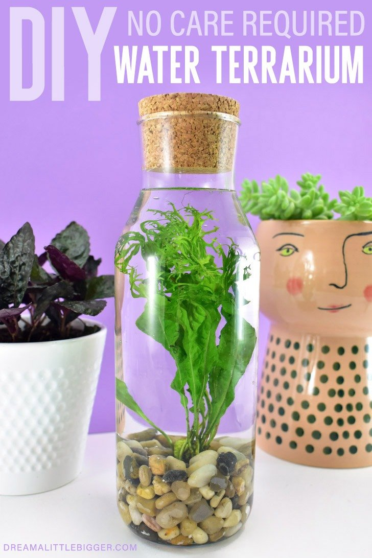 Diy No Care Required Water Terrarium Dream A Little Bigger