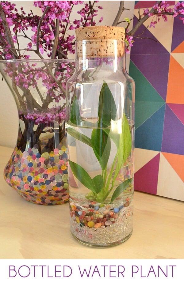 Easy Water Terrariums Bottled Water Plants ⋆ Dream A