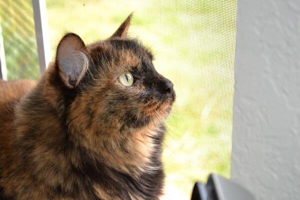 liddy bird watcher