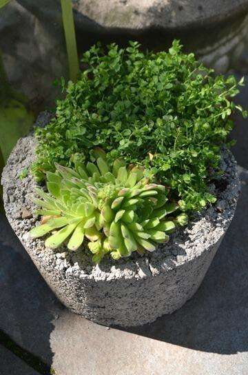 concrete-planter