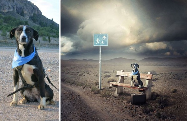 The Internet is Awesome. We need more people like this... check out an artist who turns pics of shelter dogs into surreal art to help get them adopted.