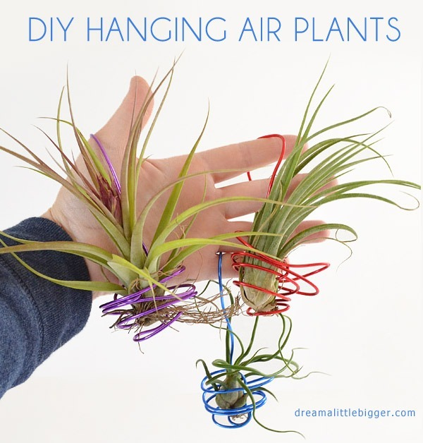 These wire hung air plants are fun and make great little gifts!