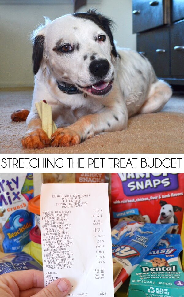 Stretch your pet budget with Purina products at Dollar General.