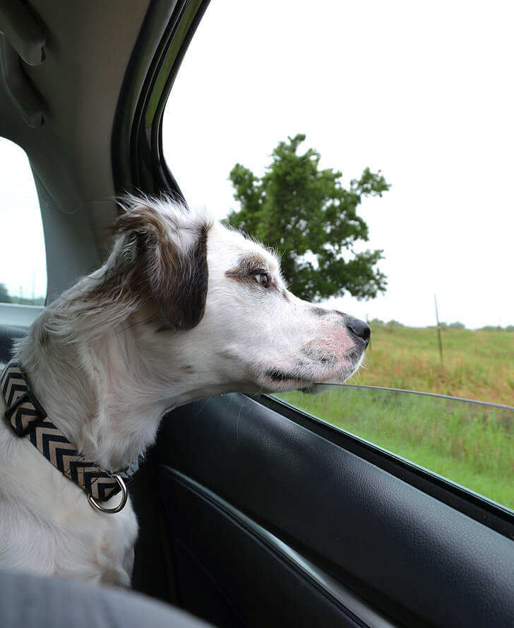 Being a road tripper is tons of fun unless you get carsick. Luckily there are ways around that!