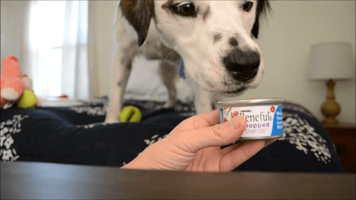What a cute dog! Apparently he likes Beneful :)