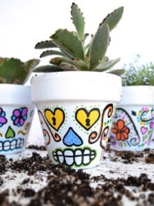 Succulents look super cute in these DIY sugar skull flower pots. Great for Halloween but colorful decor perfect for all year 'round!