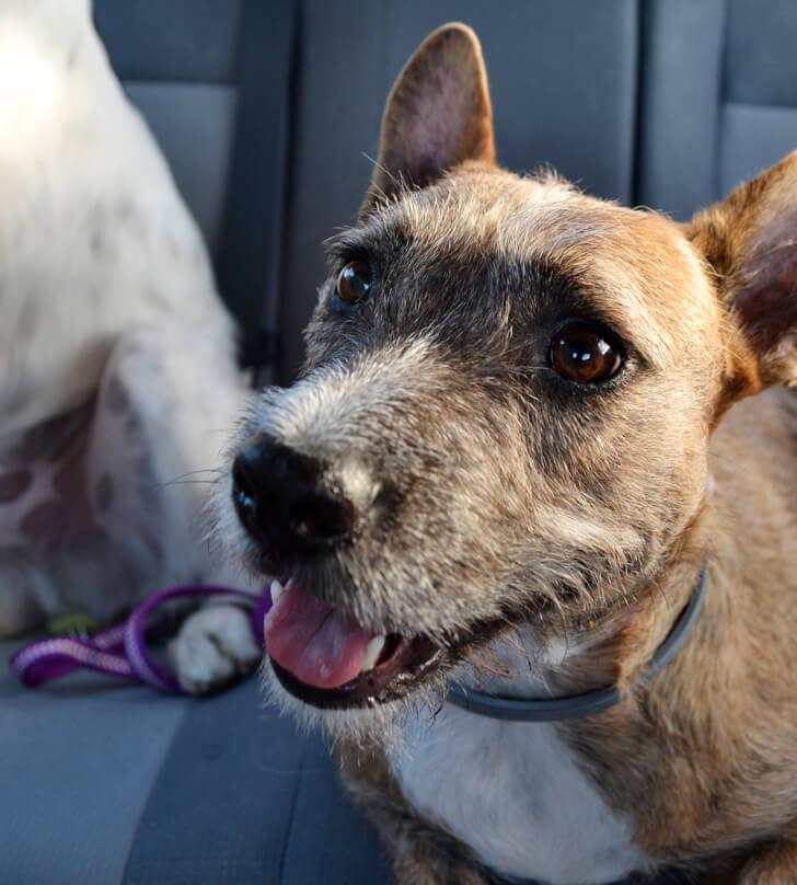 001-petsmart-adoption-dog-dreamalittlebigger