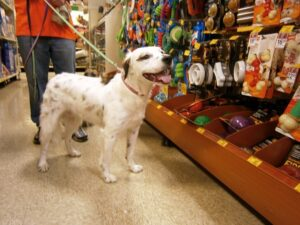 Find your new furry love at the PetSmart Charities National Adoption Event!