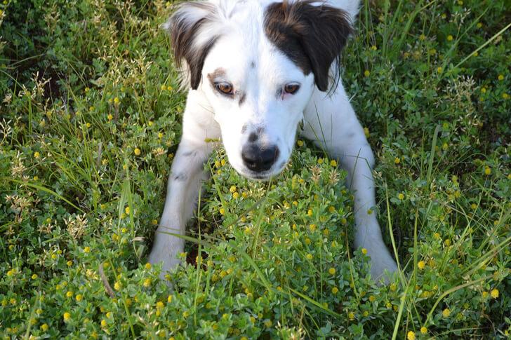 004-petsmart-adoption-dog-dreamalittlebigger