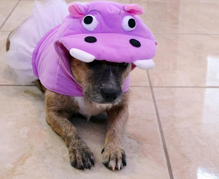 008-petsmart-adoption-dog-dreamalittlebigger