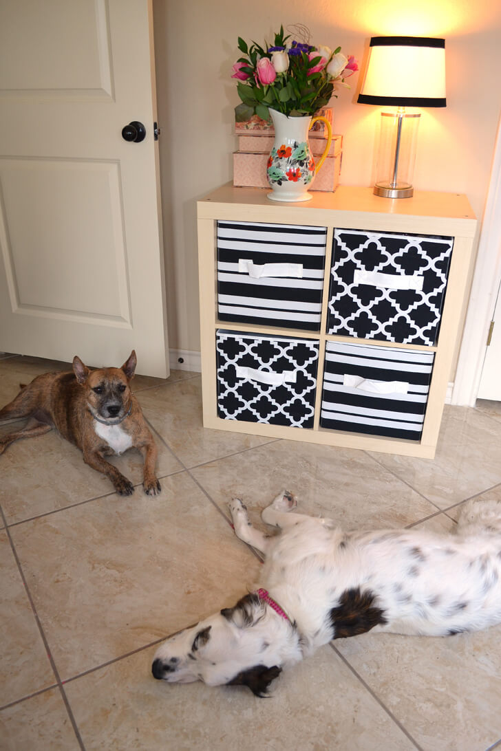 012-petsmart-adoption-dog-dreamalittlebigger