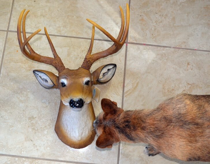 These white and gold faux taxidermy heads are EXPENSIVE! See how to DIY up your own for way less!