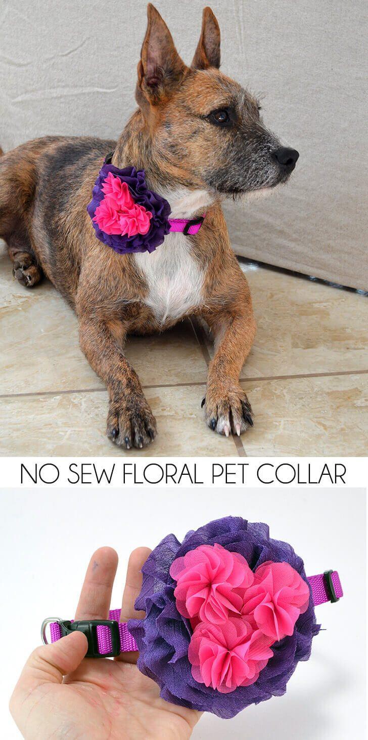 No Sew Floral Pet Collar