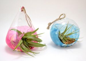 What a pretty and colorful way to add easy to care for REAL plants to your home! I love these marbled air plant holders!