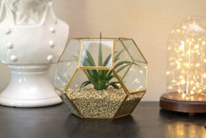 A succulent filed hexagon planter and display is super on point. See how to make filler that is lightweight enough for the glass but looks like a million bucks!