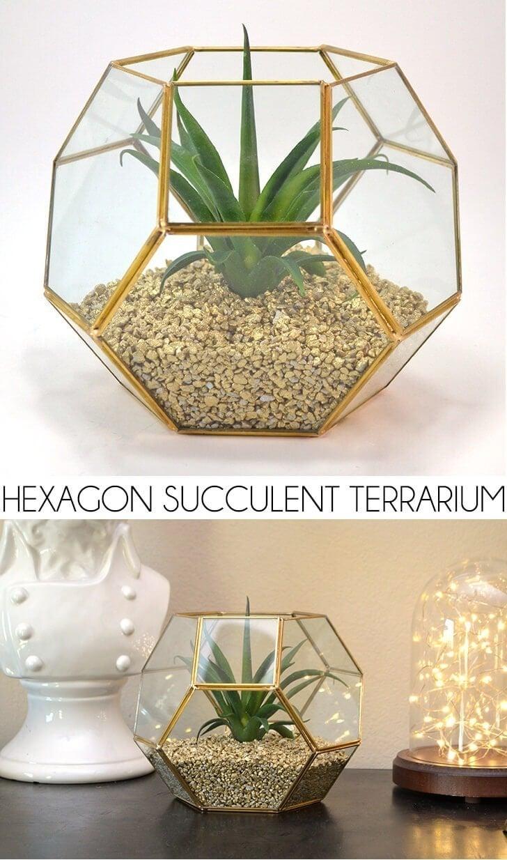 Hexagon Succulent Terrarium Dream A Little Bigger