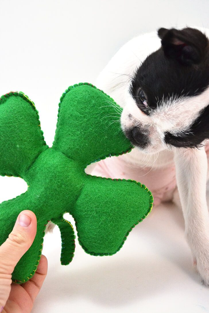 Make an inexpensive felt shamrock dog toy. It's super easy and the fur babies love handmade!