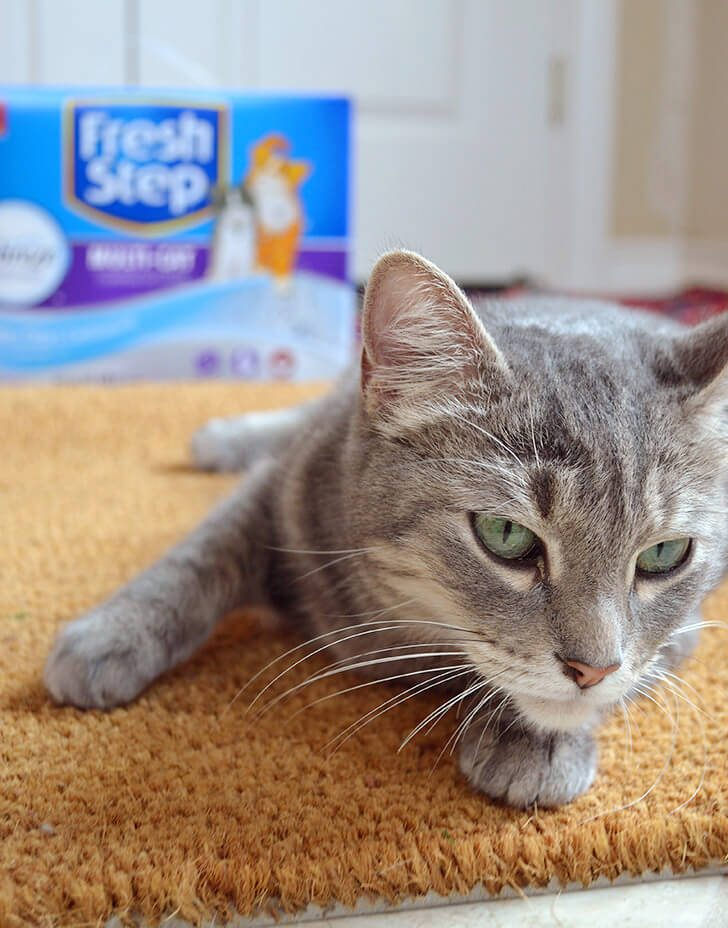 Hide away your litter box under the sink and use a plastic tub to make it for a purr-fect fit!