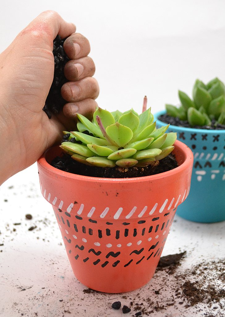 These simple succulent pots are easy to make and are great for a bright pop of life and color in your home decor!
