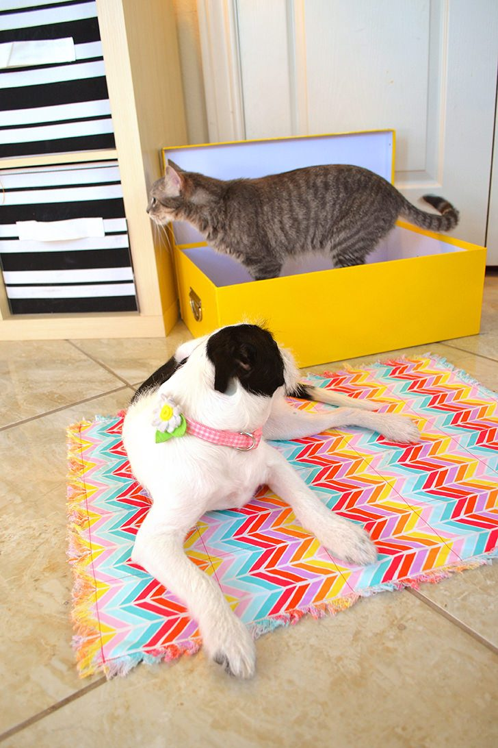 Make a calming kitty quilt and cat bed to help get through stressful times like moving or introducing a new pet to the family.