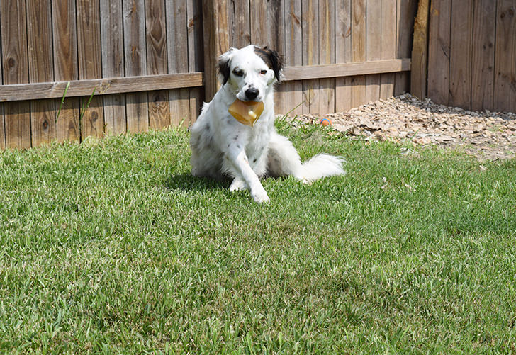 This cool down ice lick will help keep your pets cool on hot summer days!