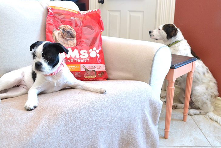 Learn how to switch your dog's food.