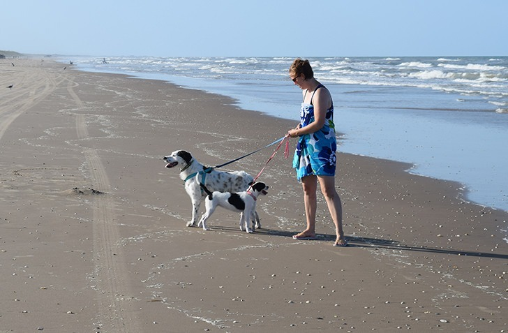 Heading to the beach this summer? Check out these tips for a beach ready pup. Enjoy your time with dogs at the beach.