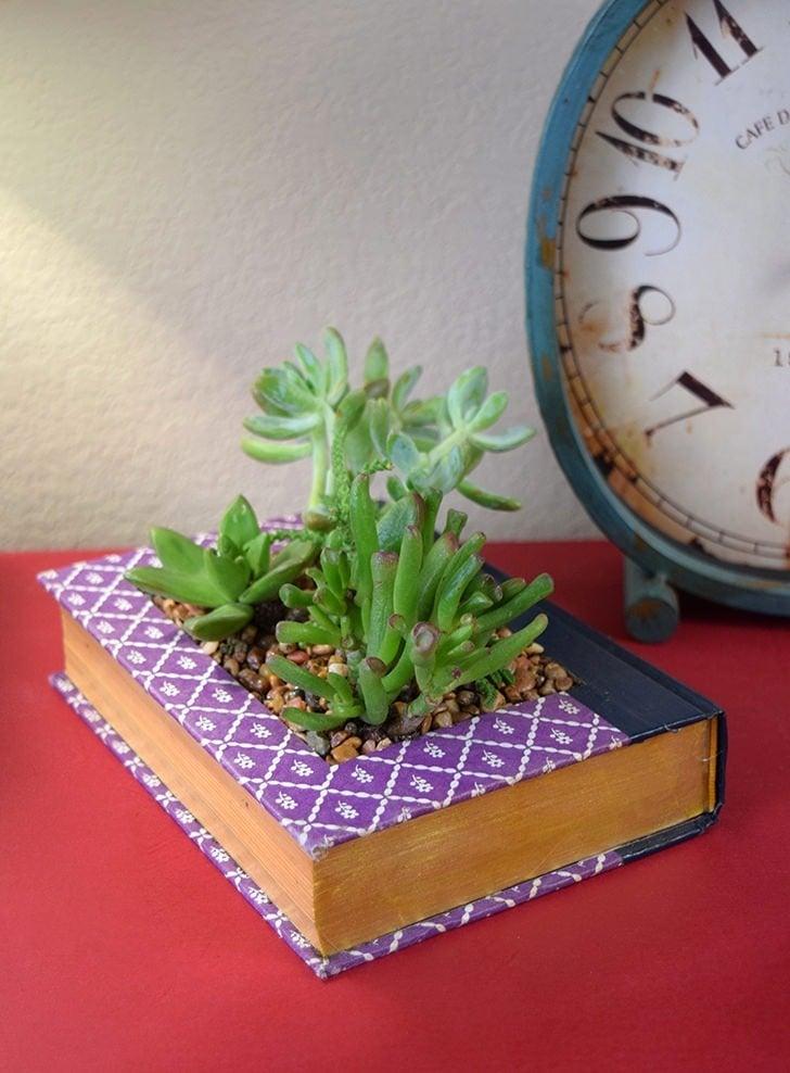 Book Succulent Planter Dream A Little Bigger