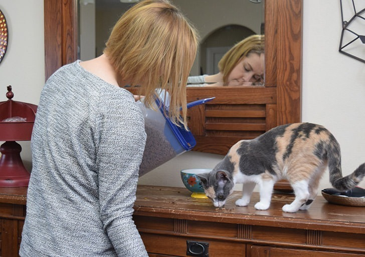 Keeping a clean house with pets isn't easy. Here are some tips for cleaning with pets.